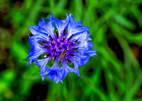 flower DSC_0208