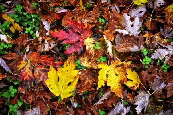 Fall Chaos 2